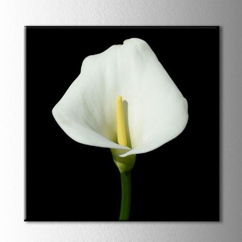 Siyah Beyaz Orkide Kanvas Tablo