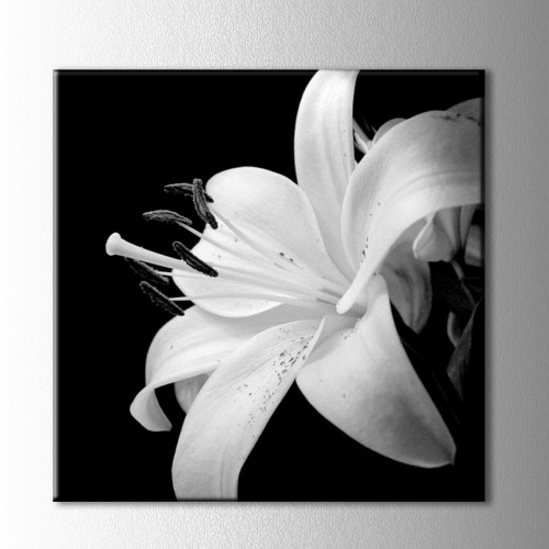 Siyah Beyaz Zambak Kanvas Tablo