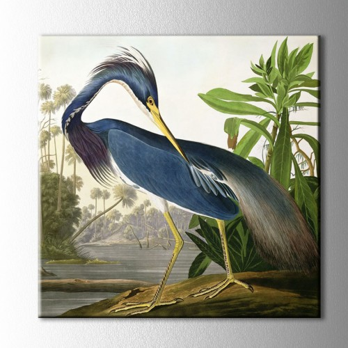 Audubon's Birds Kanvas Tablo