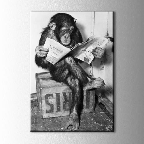 Gazete Okuyan Maymun Kanvas Tablo