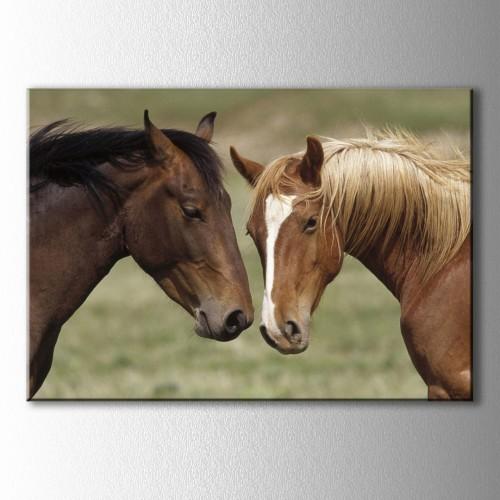 Siyah ve Kahverengi Yeleli Atlar Kanvas Tablo