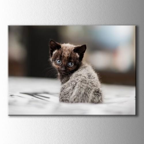 Boncuk Gözlü Yavru Kedi Kanvas Tablo