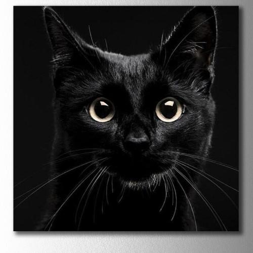 Siyah Kedi Kare Kanvas Tablo