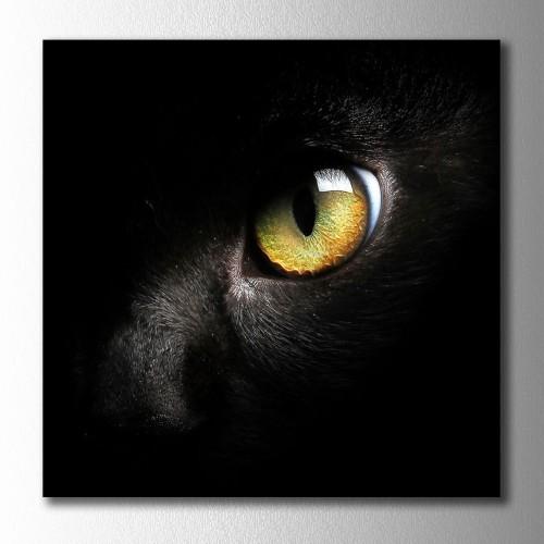 Sarı Gözlü Kedi Kare Kanvas Tablo