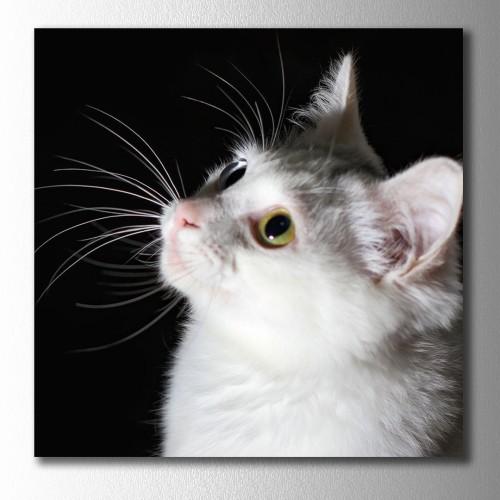 Beyaz Kedi Kare Kanvas Tablo