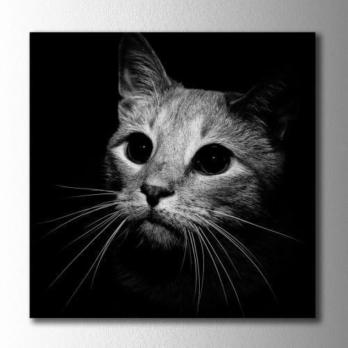Siyah Beyaz Kedi Kare Kanvas Tablo