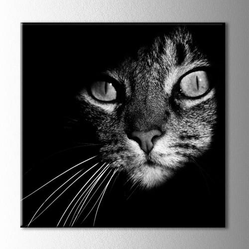 Siyah Beyaz Kedi Kanvas Tablo