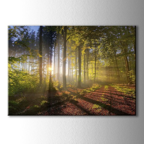 Orman İçinde Süzülen Güneş Işıkları Kanvas Tablo