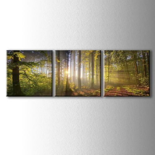 3 Parçalı Orman İçinde Süzülen Güneş Işıkları Kanvas Tablo