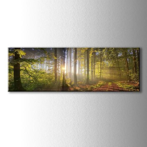 Panaromik Orman İçinde Süzülen Güneş Işıkları Kanvas Tablo