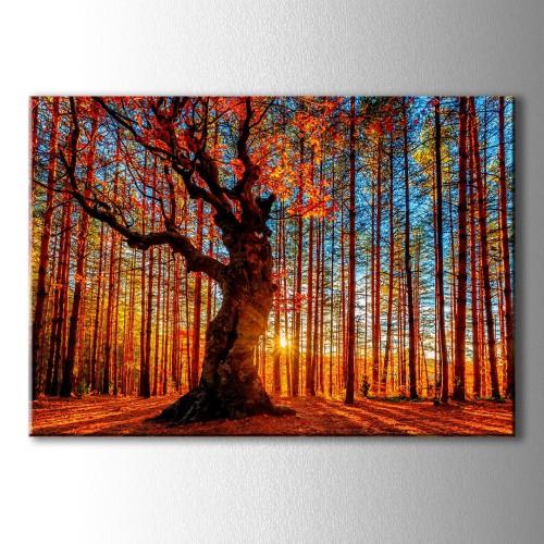 Özel Dekoratif Gün Batımı Kırmızı Ağaç Kanvas Tablo