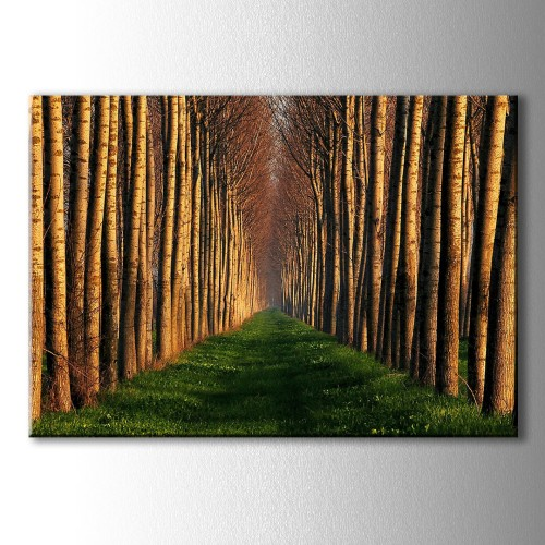 Özel Dekoratif Ağaçlı Yol Kanvas Tablo