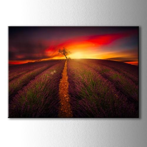 Kırmızı Güneş Lavanta Tarlası Kanvas Tablo