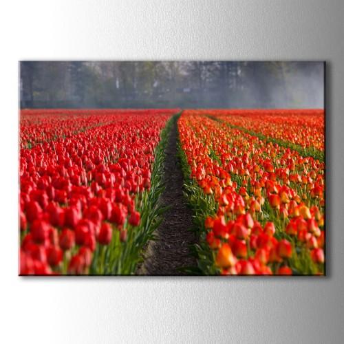 Kırmızı Lalezar Kanvas Tablo