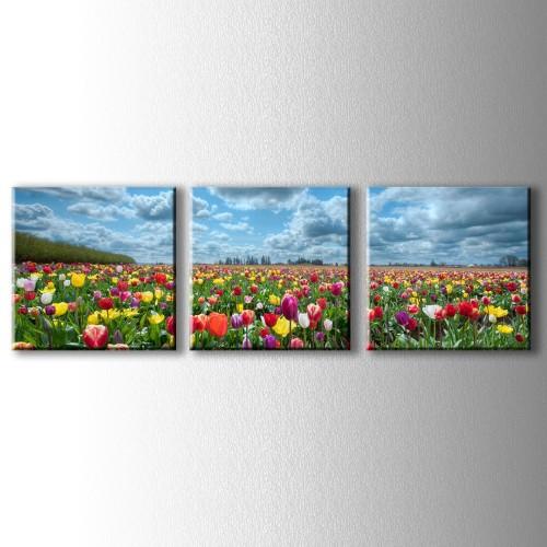3 Parçalı Renkli Laleler Kanvas Tablo