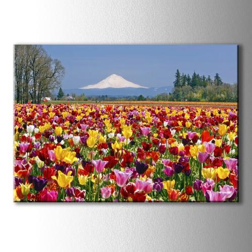 Karlı Dağ ve Renkli Çiçekler