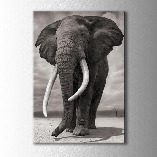 Siyah Beyaz Fil Kanvas Tablo
