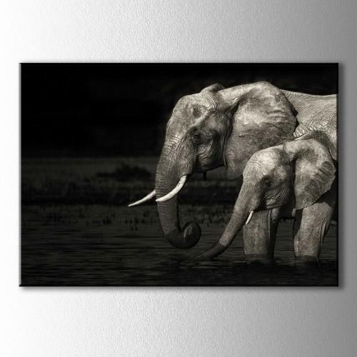 Siyah Beyaz Fil ve Yavrusu Kanvas Tablo