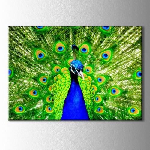 Yeşil Tavus Kuşu Kanvas Tablo