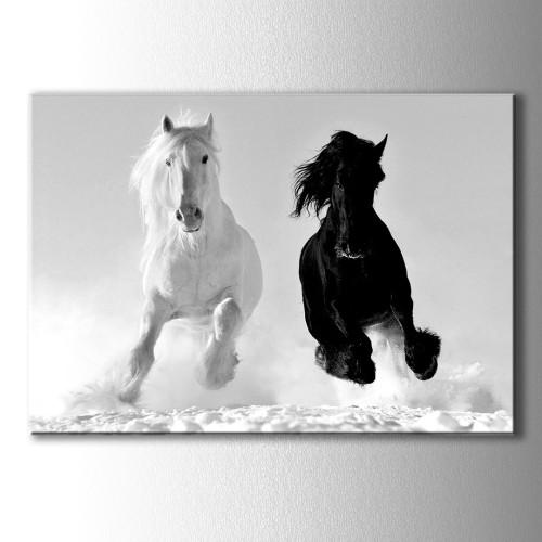 Siyah Ve Beyaz At Kanvas Tablo