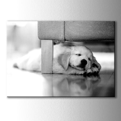 Yavru Köpek Dekoratif Kanvas Tablo