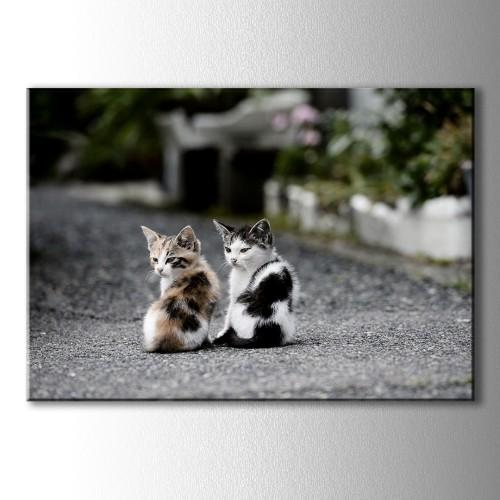 İki Yavru Kedi Kanvas Tablo