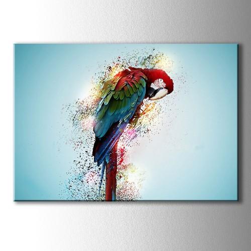 Papağan Kanvas Tablo
